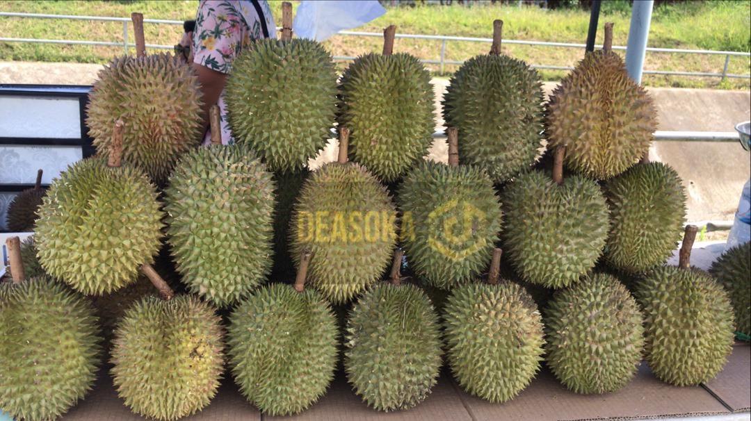 Musim durian tambah sumber pendapatan