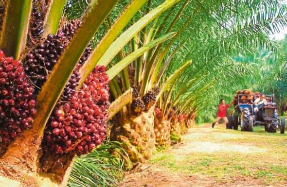 Pelancaran FEPO disasar lonjakkan lagi industri sawit Sabah